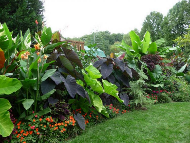 35 Amazing Tropical Landscaping Ideas To Make Beautiful Garden on Tropical Backyard Landscaping Ideas  id=45933
